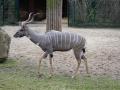 Eine Antilope