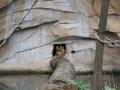 Affe in der Höhle