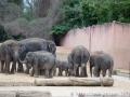 Die Elefanten Herde des Erlebnis-Zoo Hannover