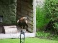 Adler in Dunrobin Castle