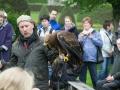 Adler auf der Hand