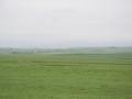 Grüne saftige Weiden auf den Orkney Inseln