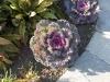 lilanes Ziergemüse