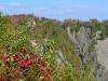 Die Montmorency Wasserfälle durch die Bäume