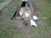 Hühner vor Ihrem Stall am picken