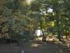 Wald bei Charleston, Illinois