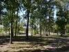 Wald bei Charleston IL