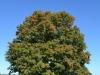 Noch grüner Baum