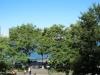 Bäume am Hudson River