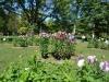 Blumen im Public Garden 1