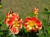 Blumen mit Bienen