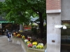 Blumen am Straßenrand im Zentrum Torontos