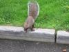 Eichhörnchen in Niagara Falls