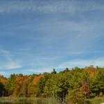 bunter Wald auf dem Weg nach Toronto