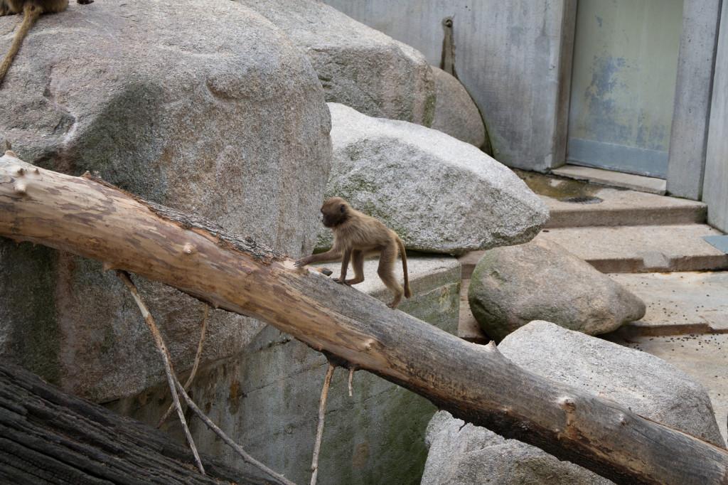 Kleine Affen in der Wilhelma