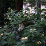 Schmetterling im Schmetterlingshaus