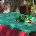 Frosch frißt Fliege