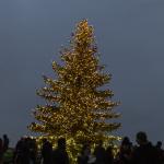 Weihnachtsbaum auf der Kaiserburg Nürnberg