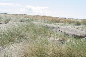Blick über die Dünen an der Nordsee (Rømø)