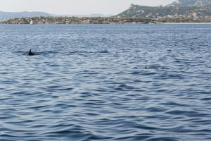 Zwei Delfine nebeneinander