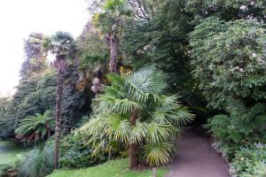 The Lost Gardens of Heligan - durch den Dschungel