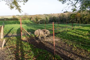 The Lost Gardens of Heligan - Emus