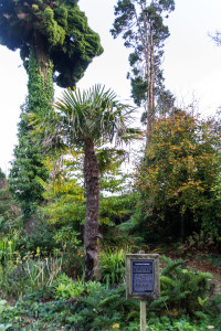 The Lost Gardens of Heligan - The Witches Broomstick (Hexenbesen)