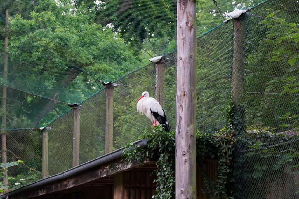 Storch ruht sich aus
