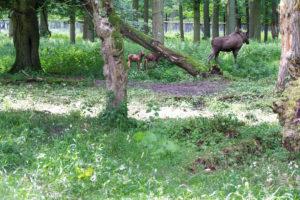 Baby Elch mit großem Elch