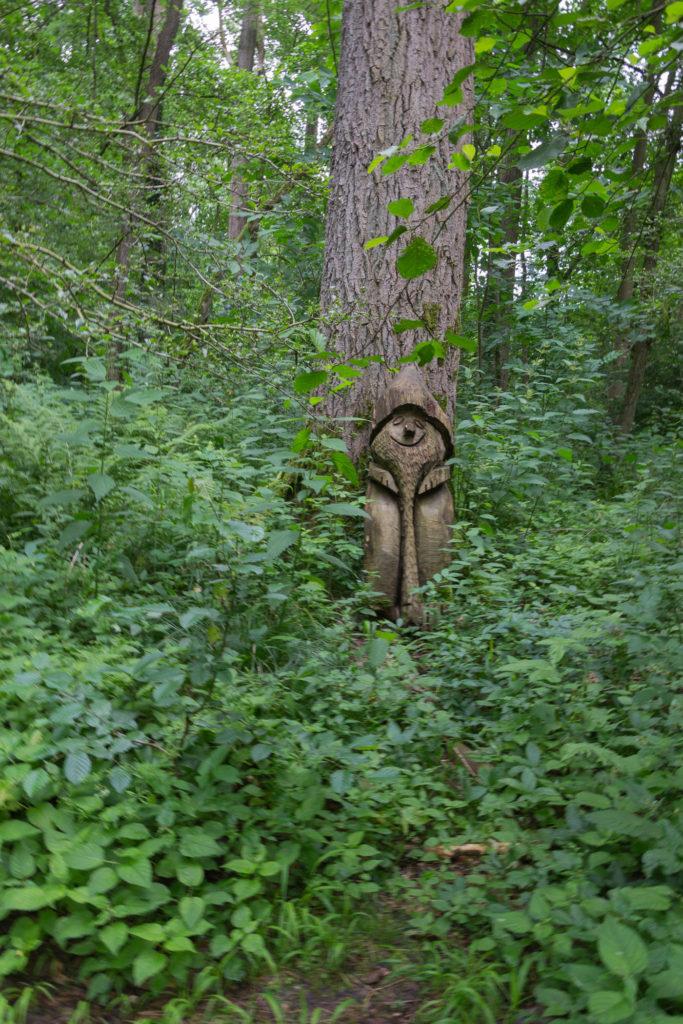 Zwerg im Wald - Wisentgehe Springe