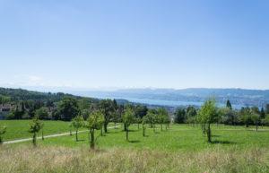 Diese Aussicht - Zürich