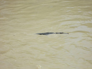 Crocdile Massacre - Das passende Krokodil