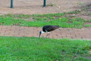 Pickender Vogel aus dem Campingplatz