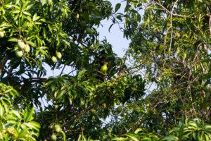 Grüner Papagei im Baum