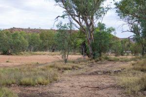 Ausgetrockneter Fluss in Alice Springs