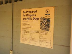 Warnung vor Dingos