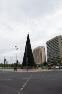Riesengroßer Pyramiden Weihnachtsbaum in Australien