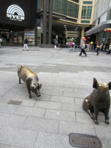 Schweine vor Myer Centre