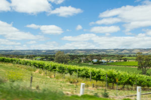 Weinberge bei Adelaide
