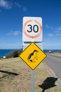 30km/h wegen den Pinguinen