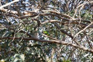Papagei im Baum