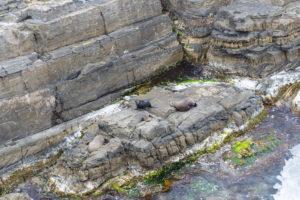 sich sonnende Seelöwen