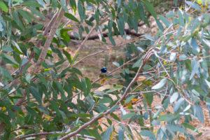 Kleiner Blauer Vogel