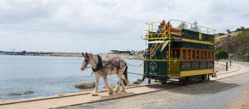 Victor Harbor Horse Drawn Tram - starkes Pferd vor dem Bus