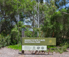 Schild: Naracoorte Caves National Park
