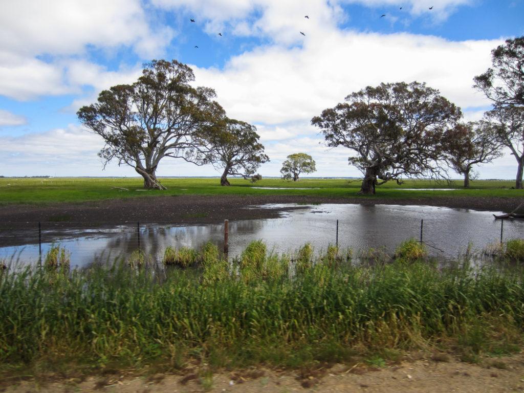 Teilweise überschwemmtes Weideland