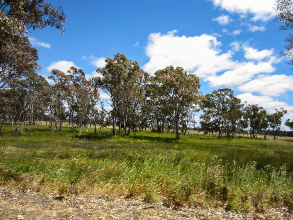 Bäume auf der Wiese in Australien