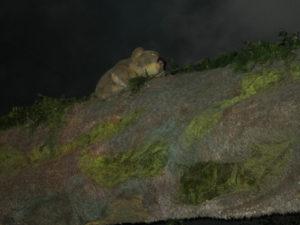 Was ist das für ein Tier im Wonambi Fossil Centre