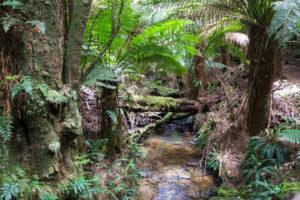 Urwald in Australien