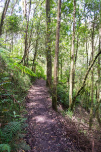 Fußweg mieten durch den Melba Gully Urwald